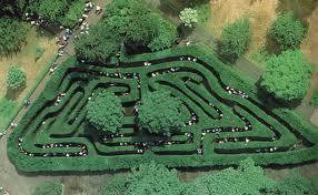 Hampton Court Hedge Maze