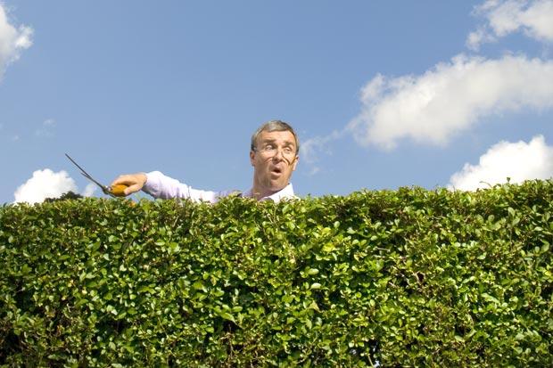 Hedges serve as natural fences.